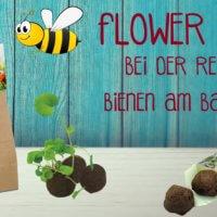 Flower Balls Frühling Bienen