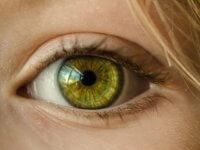 Die Genetik der Farbwahrnehmung